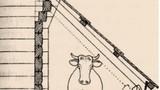 Lopa za krave ob strani