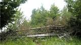 Pot čez Rigelj je neoznačena lovska pot z različnimi ovirami